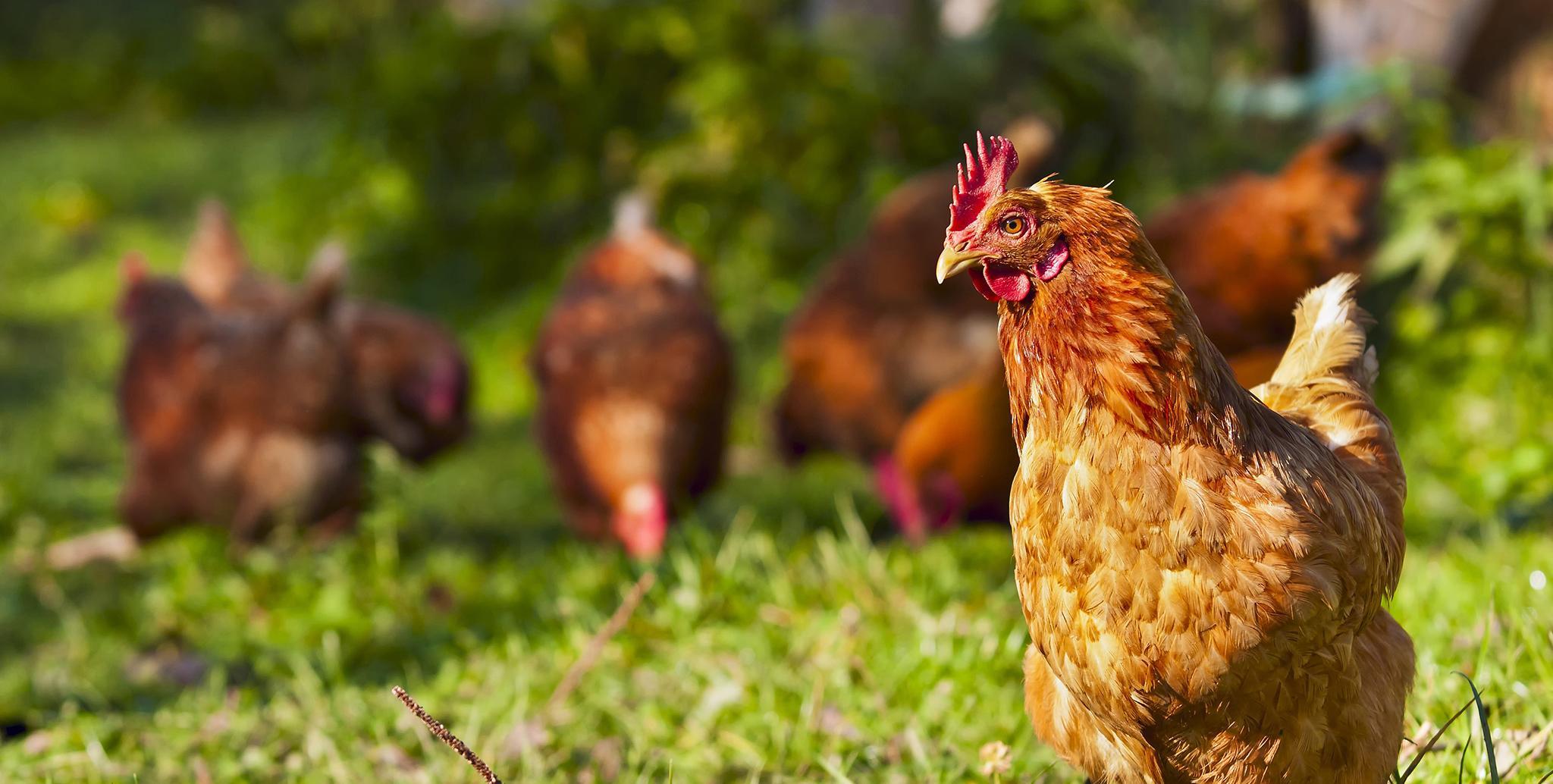 Бизнес с животными: 9 интересных идей