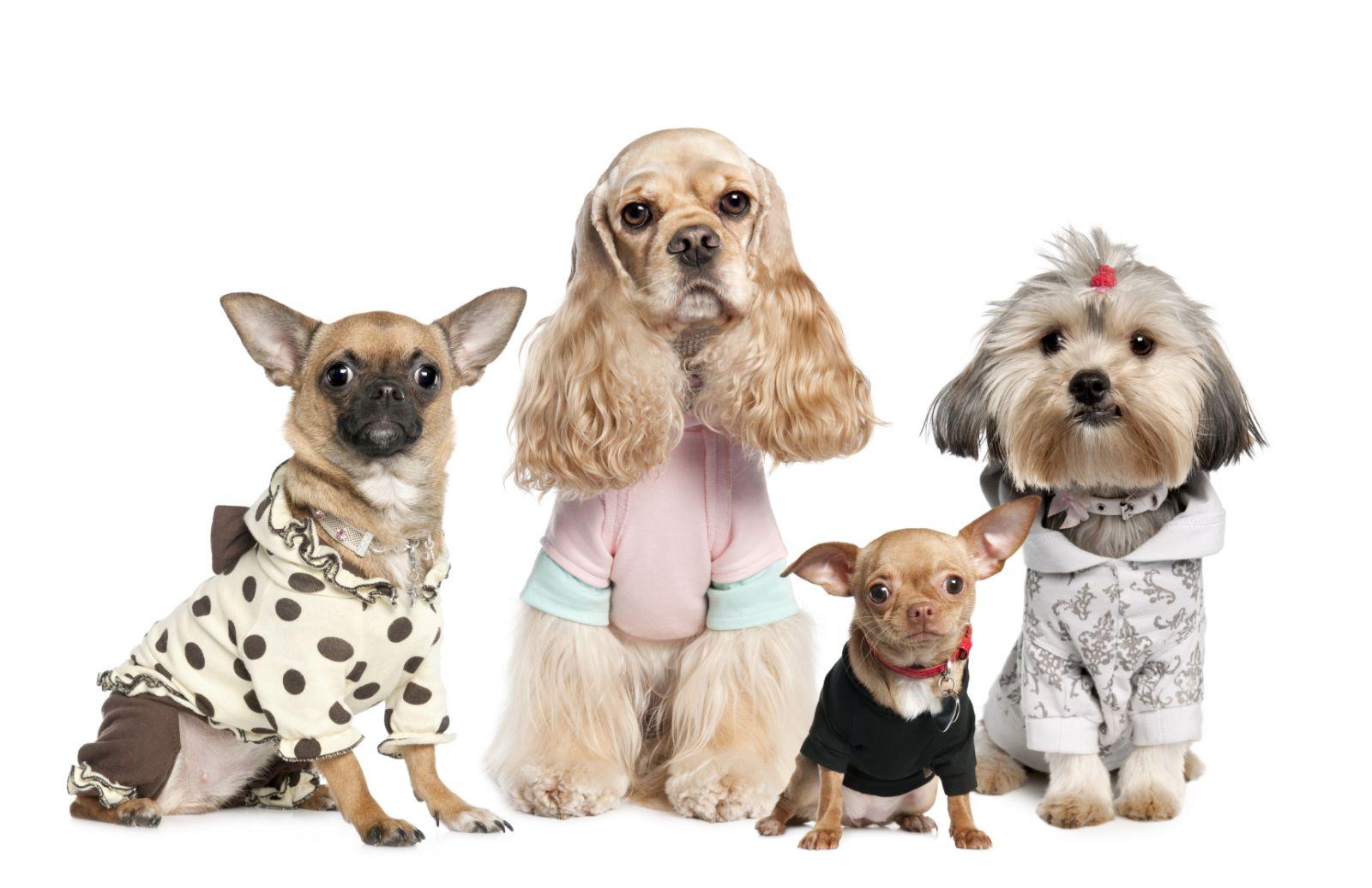 Одежда для собачек: Стабильный спрос и щедрые покупатели