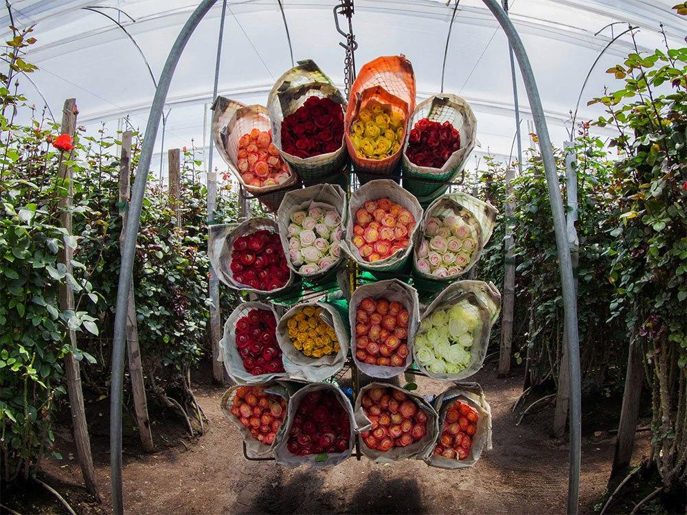 Бизнес-идея — выращивание цветов