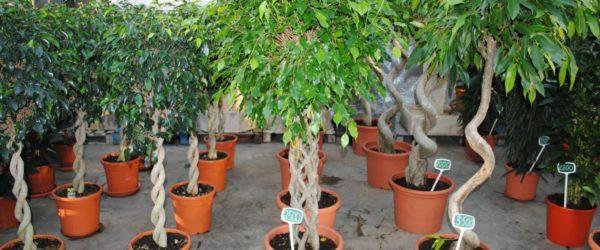 Уход за растениями – любимый бизнес!