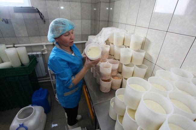 Сыр на этапе производства
