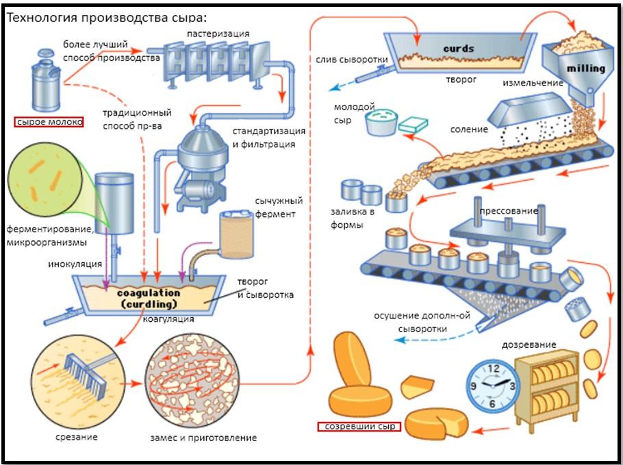 Что нужно для производства сыра