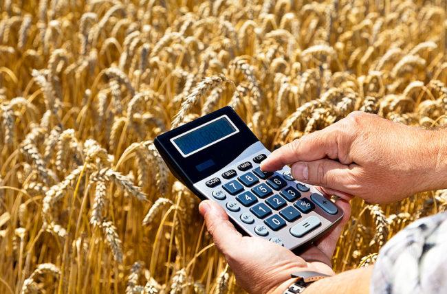 Пшеница и калькулятор