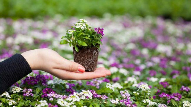 Девушка держит в руке рассаду цветов