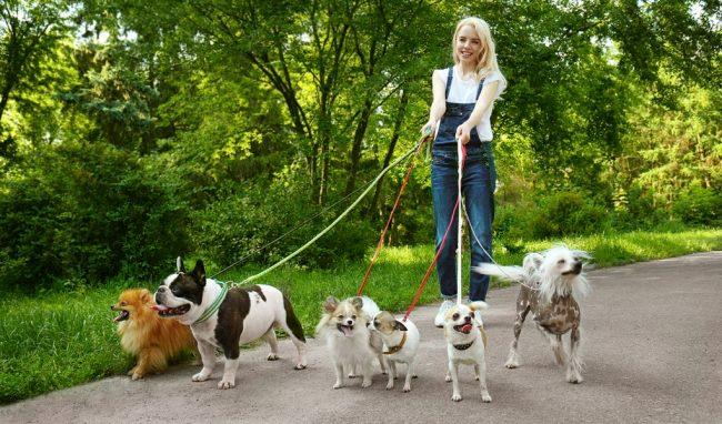 Девушка гуляет в парке с собаками