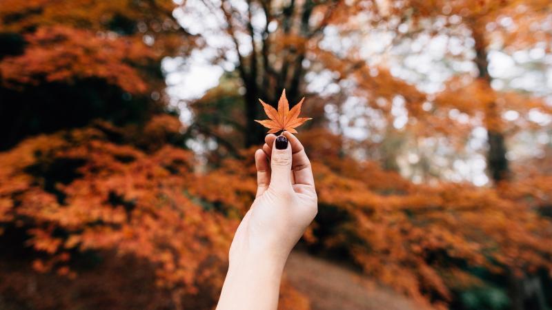 Девушка держит в руке кленовый лист