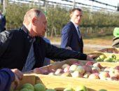 Президент России согласен снизить НДС на фрукты