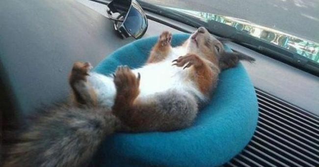 Белка лежит на подушке