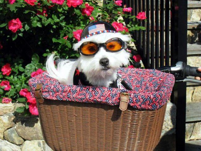 Солнцезащитные очки для собаки