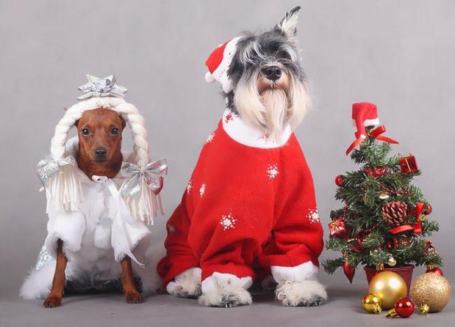 Собаки в новогодней одежде