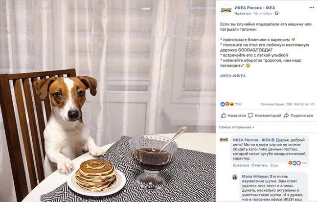 Собака сидит за столом с блинами и вазочкой варенья