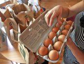 Яйца курицы