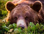 В Минприроды оценили стоимость природных богатств России