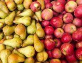 Россия запретит ввоз яблок и груш из Белоруссии