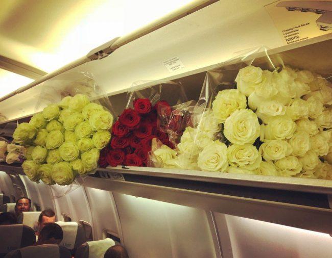 Цветы в самолёте