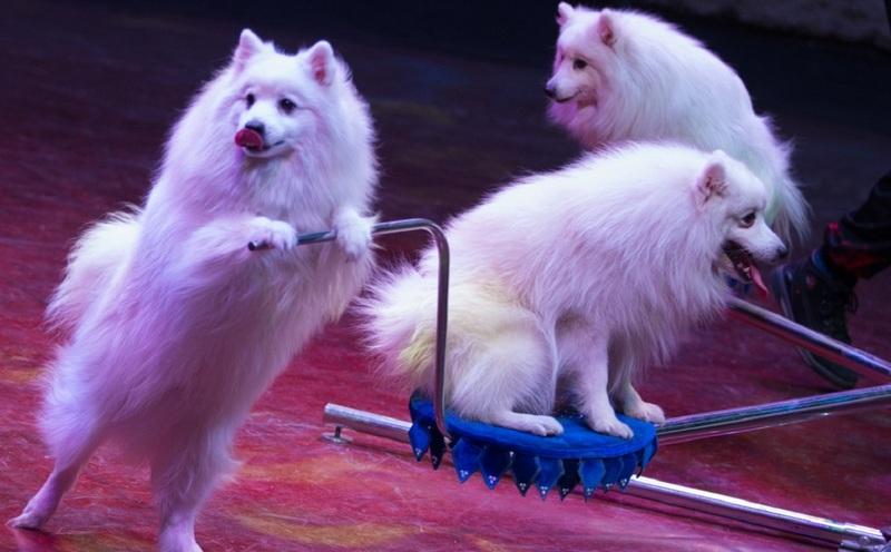 Правительство разрешило использовать домашних животных в сфере развлечений
