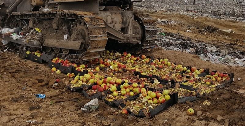 Россельхознадзор рассказал, сколько санкционных продуктов было уничтожено за 4 года