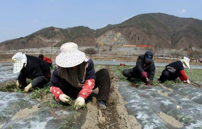 Женщины и мужчины работают на поле