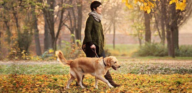 Девушка выгуливает собаку